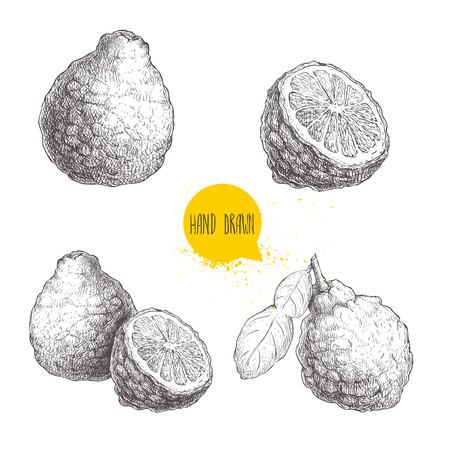 Frutas de bergamota estilo esboço desenhadas a mão. Lime de Kaffir inteiro com folha e meia ilustração vetorial. Comida orgânica. Coleção de citrinos isolada no fundo branco. Foto de archivo - 86145361