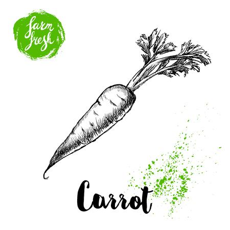 De hand getrokken wortel van de schetsstijl met doorbladert affiche. Wijnoogst die wortel kijken die op witte achtergrond wordt geïsoleerd. Vector groenten illustratie.