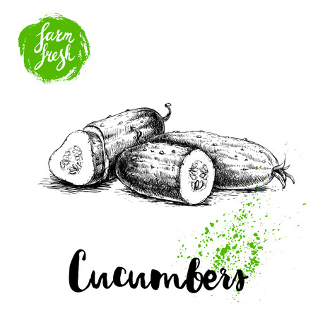 Hand-drawn sketch style whole cucumber and half of cucumber with a slice. Vector fresh farm vegetable poster. Retro illustration. Иллюстрация