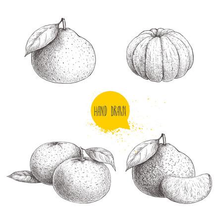 Desenho desenhado esboço conjunto de mandarinas inteiras e descascadas. Ilustração de estilo vintage de tangerina com folhas de fatias. Arte finala do vetor da comida de Eco isolada no fundo branco.