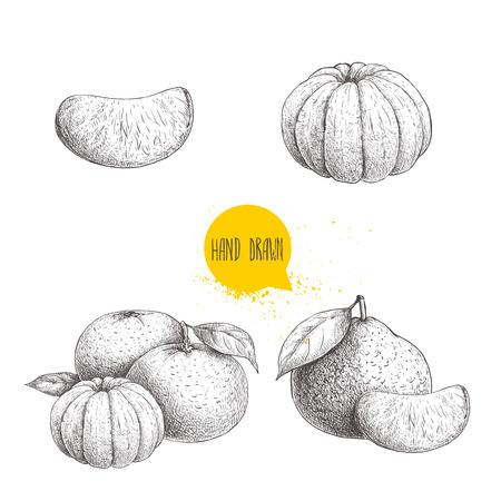 Boceto dibujado a mano set od mandarinas enteras y peladas. Ilustración de estilo vintage de mandarina con hojas y rebanadas. Ilustraciones del vector de la comida de Eco aisladas en el fondo blanco. Foto de archivo - 86481410