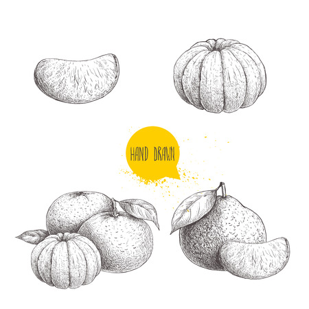Hand drawn sketch set od mandarins whole and peeled. Vintage style illustration of tangerine with leafs an slices. Eco food vector artwork isolated on white background.