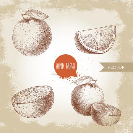 Hand drawn sketch style orange fruit compositions set, Half orange and segment slice, Hand made vector citrus fruit illustration isolated on old looking background. Illustration