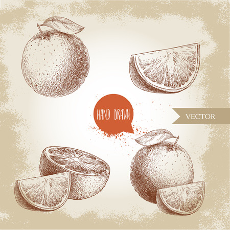 Hand drawn sketch style orange fruit compositions set, Whole fruit and slices, Hand made vector fruit illustration isolated on old looking background. Иллюстрация