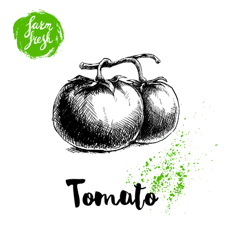 Hand drawn sketch style whole tomatos branch. Eco food vector illustration poster. Farm fresh food.