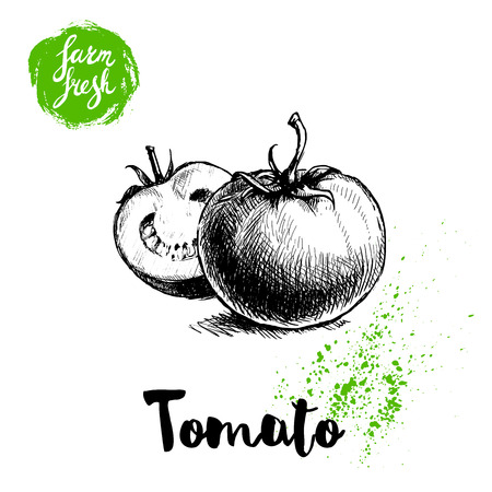 Hand drawn sketch style whole tomatos whole and half sliced. Eco food vector illustration poster. Farm fresh food.