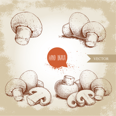 Hand drawn sketch style mushroom composition set