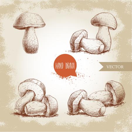 Hand drawn sketch style porcini mushroom set. Fresh forest boletus edulis. Italian food ingredient. Fresh market product. Ilustrace