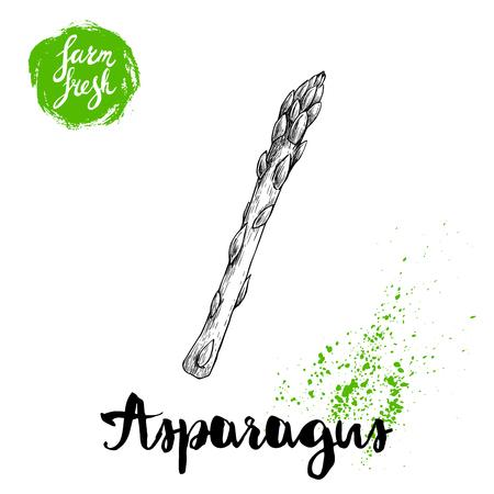 Ręcznie rysowane szkic styl pojedynczy kiełek szparagi. Eko żywność wektor ilustracja na białym tle.