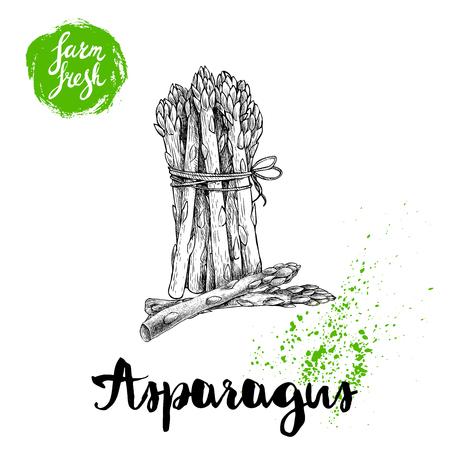 Hand getrokken schets aspergebos. Biologische voeding boerderij verse vectorillustratie geïsoleerd op een witte achtergrond.