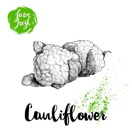 Hand drawn sketch style cauliflowers. Çizim