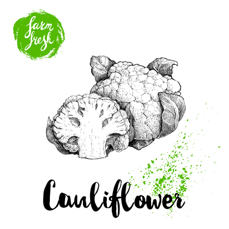 Hand drawn sketch style cauliflower composition. Banco de Imagens - 88091803