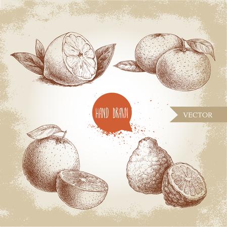 Hand drawn sketch style citrus fruits set. Lemon half, lime, tangerine, mandarine, oranges and bergamots. Vector organic food illustrations.