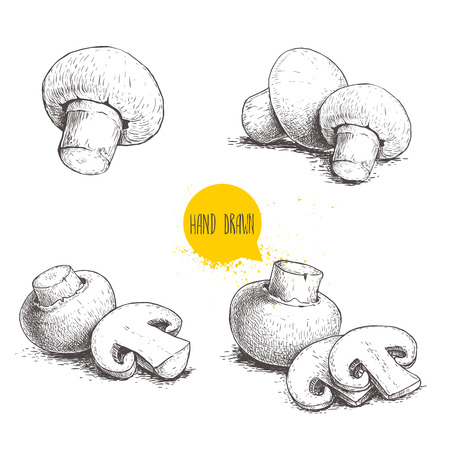 Sketch of mushroom.