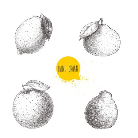 As frutas cítricas tiradas à mão do estilo do esboço ajustaram-se isoladas no fundo branco. Limão, lima, tangerina, mandarina, laranja e bergamota. Ilustrações vetoriais. Foto de archivo - 89868867