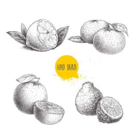 Hand drawn sketch style citrus fruits set. Lemon half, lime, tangerine, mandarine, oranges and bergamots. Vector organic food illustrations.