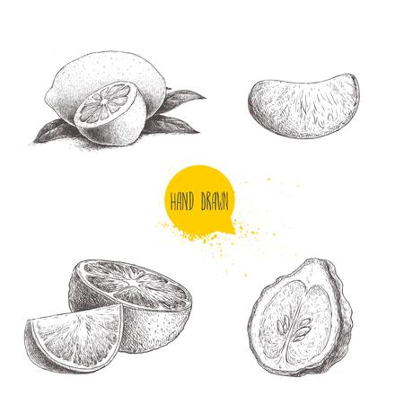 Conjunto de frutas cítricas estilo esboço mão desenhada. Meia do limão, cal, tangerina, parte do mandarino, laranjas e bergamotas isolados no fundo branco. Ilustrações de comida orgânica de vetor. Foto de archivo - 89868876