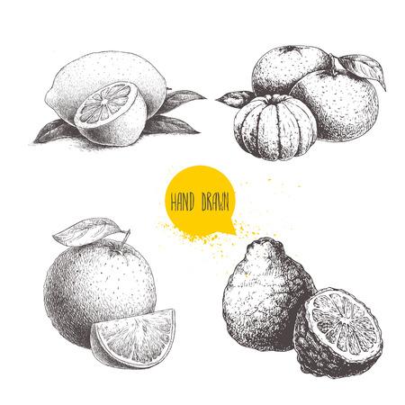 Ensemble d'agrumes style croquis dessinés à la main. Demi citron, citron vert, mandarine, composition de mandarine, oranges et bergamotes isolés sur fond blanc. Illustrations de vecteur d'aliments biologiques. Vecteurs