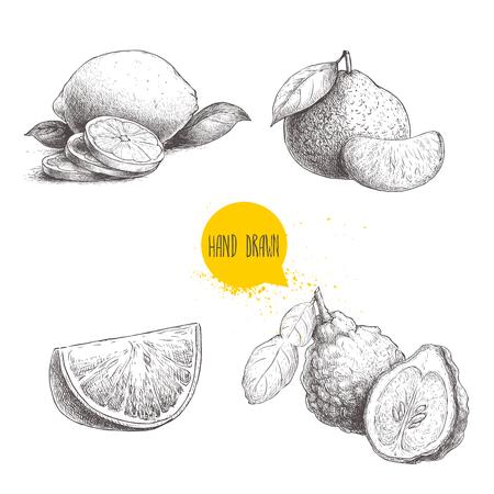Hand drawn sketch style citrus fruits set. Lemon half, lime, tangerine, mandarin composition, oranges and bergamots. Vector organic food illustrations isolated on white background. Illustration