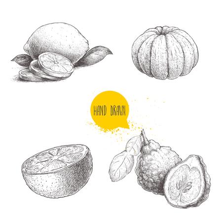 Hand drawn sketch style citrus fruits set. Lemon half, lime, peeled tangerine, mandarin, oranges and bergamots. Vector organic food illustrations isolated on white background.