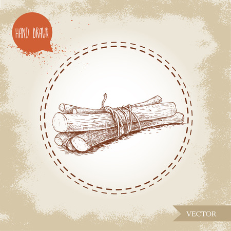 Hand drawn sketch style liquorice roots bunch tied with strings . Herbal and aromatic vector illustration.