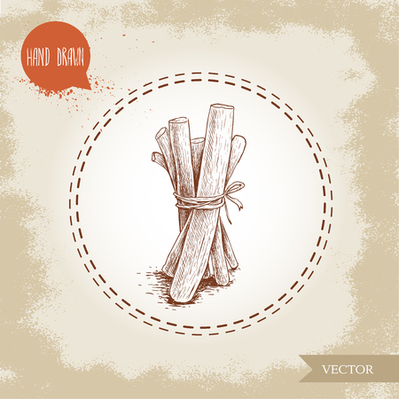 Hand drawn sketch style lstanding iquorice roots bunch. Herbal and aromatic vector illustration.