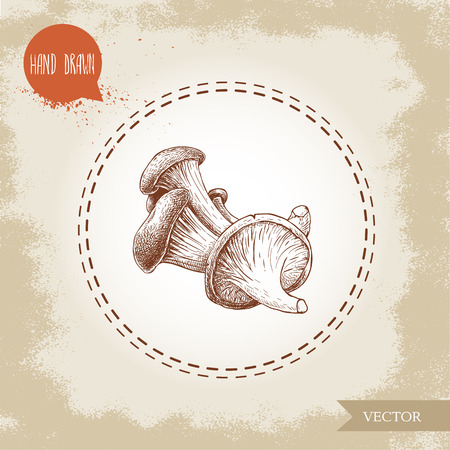 Hand drawn sketch style oyster mushrooms. Natural food ingredient vector illustration. Ilustrace