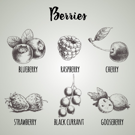 Hand drawn sketch style different berries set. Blueberry bunch, raspberry, cherry, strawberry, black currant branch and gooseberry. Organic eco food. 版權商用圖片 - 90423719