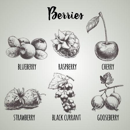 Hand drawn sketch style different berries set. Blueberry bunch, raspberry, cherry, strawberry, black currant with leaf and gooseberry branch. Organic eco food. 向量圖像
