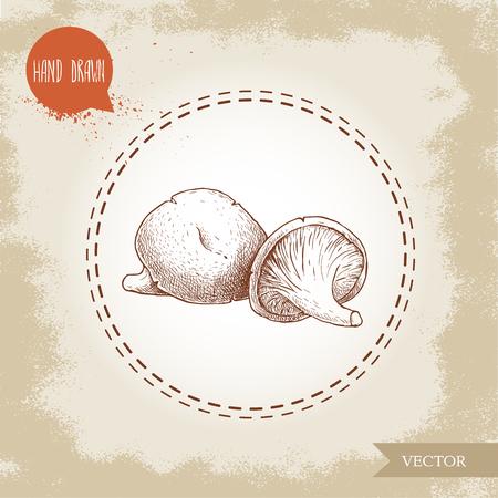 Hand drawn sketch style oyster mushrooms. Forest natural food ingredient vector illustration. Ilustração