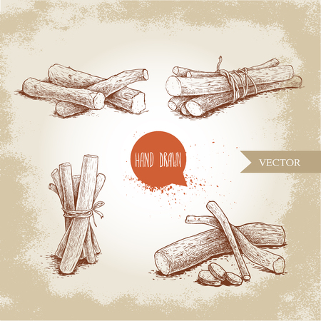 Hand drawn sketch style standing liquorice roots bunches set. Herbal and aromatic vector illustrations collection. Standard-Bild - 90499961