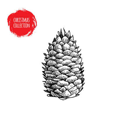 Hand drawn pine cone sketch style. Christmas symbol isolated on white background. Vector botanical illustration.