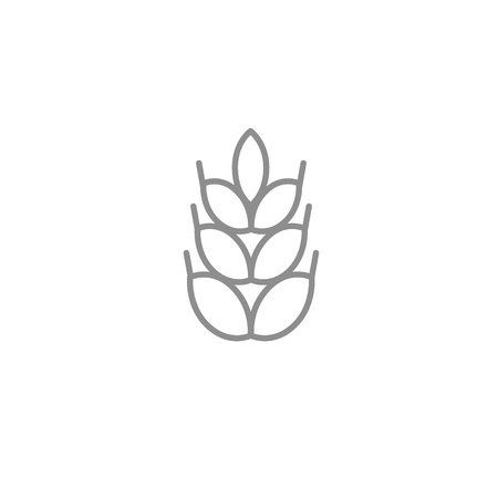 Thin wheat thin icon. Outline agriculture and bakery vector symbol isolated on white background.