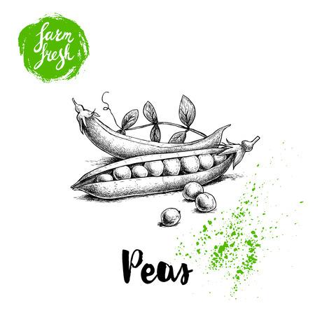 Pois de croquis dessinés à la main avec les feuilles. Légumes frais de la ferme. Illustration de vecteur d'aliments biologiques isolé sur fond blanc.