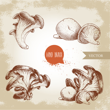 Hand drawn sketch style oyster mushroom bunches set. Fresh farm food vector illustrations collection.