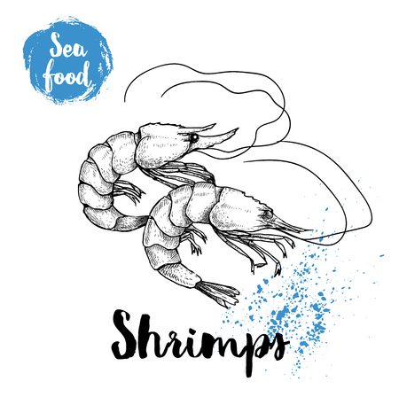 Hand drawn sketch shrimps isolated on white background. Seafood symbols vector illustration. Prawns.