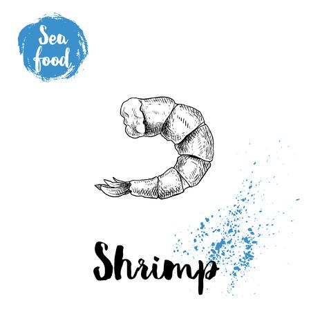 Hand drawn sketch boiled or grilled shrimp. Seafood symbols vector illustration. Prawn.