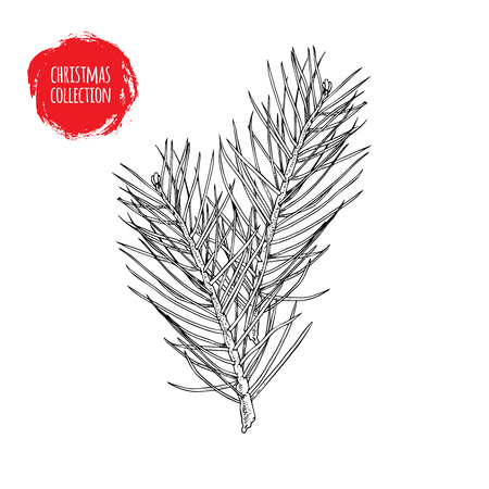 Hand drawn pine tree branches composition. Christmas and witner seasonal design element. Great for holiday decor, greetings. Vector illustration.