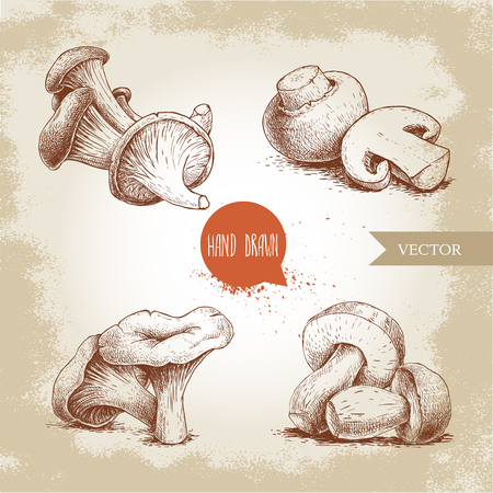 Hand drawn sketch style mushrooms compositions set. Champignons, oysters, chanterelles and porcini mushrooms. Organic eco raw food vector illustrations. Ilustracja