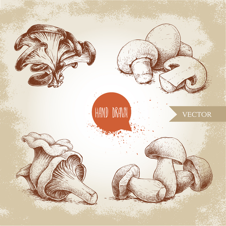 Hand drawn sketch style mushrooms compositions set. Champignon with half, oysters, chanterelles and porcini mushrooms. Organic eco raw food vector illustrations. Ilustracja