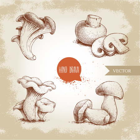 Hand drawn sketch style mushrooms compositions set. Champignon with cuts, oysters, chanterelles and porcini mushrooms. Organic eco raw food vector illustrations.