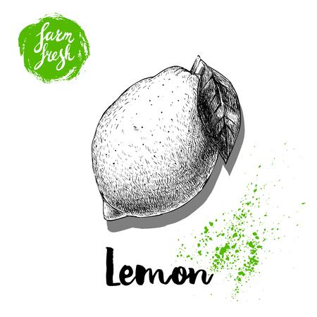 Hand drawn sketch lemon with leaf sticker poster.