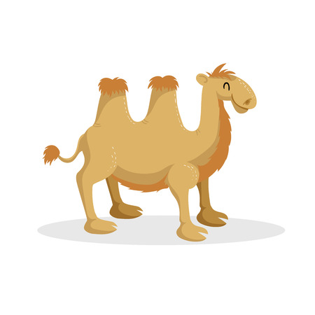 Cartoon trendy design bactrian camel. African desert animal. Wildlife and zoo vector illustration icon.