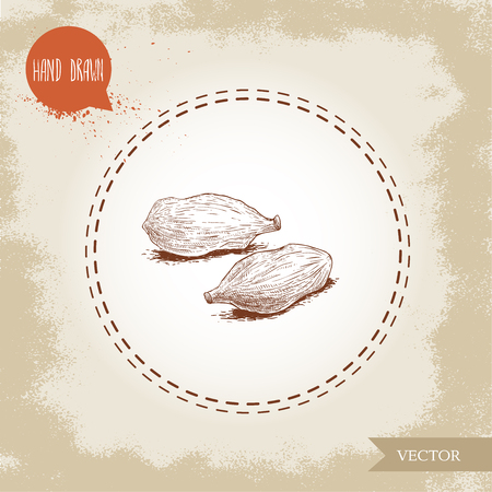 Hand drawn sketch style cardamom pods. Natural herbs and spice on old looking background. Vector illustration. Illustration