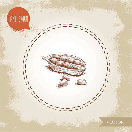 Hand drawn sketch style open cardamom pod with little seeds. Natural herbs and spice on old looking background. Vector coriander illustration. Illustration