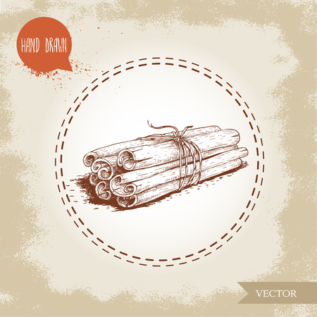 Hand drawn sketch style cinnamon sticks tied with twine. Isolated on vintage background. Vector healthy spice.
