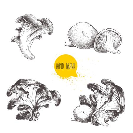 손으로 그린 스케치 스타일 굴 버섯 흰색 배경에 고립 된 집합. 신선한 숲 음식 벡터 일러스트 컬렉션.