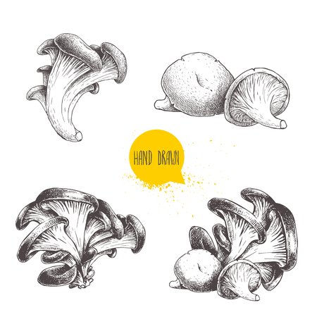 Hand drawn sketch style oyster mushroom set isolated on white background. Fresh forest food vector illustrations collection.