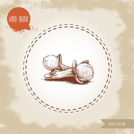 手描きスケッチスタイルクローブスパイス花種子バッチ。ベクトル手作りのスパイスとハーブのイラスト。  イラスト・ベクター素材