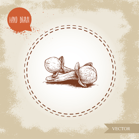 Hand drawn sketch style clove spice flower seeds batch. Vector hand made spice and herbs illustration. Illustration